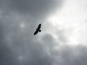hawk 3349